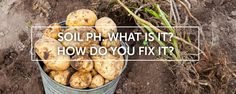How do you fix it? Love Garden, Garden Ideas, Urban Agriculture, Soil Ph, Articles, Gardens, Community, Vegetables, Food