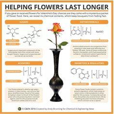 Helping flowers in a vase last longer