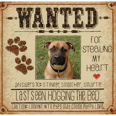 This cross stitch kit from Dimensions will steal the heart of any dog-lover. Created as a frame for that favorite photo of your pooch, this faux wanted poster is filled with all kinds of corny, cuddly sentiments that make your heart smile. Available from Stoney Creek: http://store.stoneycreek.com/dimensions-kit---dog-wanted-p19767.aspx