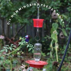 If you have ants raiding your hummingbird feeder, this simple DIY moat will prevent them from ever reaching the sugar water. Make Hummingbird Food, Hummingbird Nectar, Hummingbird Garden, Sugar Water For Hummingbirds, How To Attract Hummingbirds, Hummingbird Migration, Pop Can Crafts, Humming Bird Feeders, Humming Birds