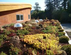Google Image Result for http://assets.inhabitat.com/wp-content/blogs.dir/1/files/2010/04/Salmon_Creek_School_green_roof.jpg