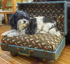 Vintage suitcase made into a dog bed.  Super cute, but I'd need a much bigger suitcase for my dog!