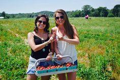 UNH students eat local by picking their own strawberries!  #UNH #health #strawberryfields #BigandLittle #KappaDelta pic.twitter.com/klbCiO0YmC
