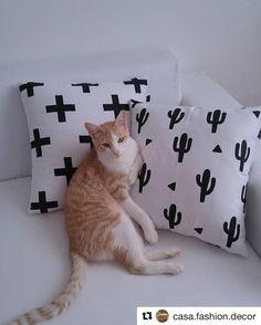 Selo de aprovação das nossas almofadas pelo gato mais fofinho 😊  Muito obrigada @casa.fashion.decor pela compra!  #home #decor #decoracao #catsofinstagram #cat #almofadas #animals