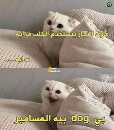 Arabic Memes, Arabic Funny, Funny Arabic Quotes, Funny Photo Memes, Funny Qoutes, Jokes Quotes, Funny Reaction Pictures, Funny Pictures, Dora Funny