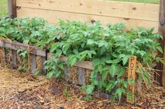 the 2015 garden experiments what worked and what didn t, composting, diy, gardening, go green, pest control, The potato crates performed well