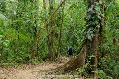 Corcovado National Park Day Tour - Uvita Costa Rica