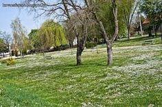Ma mivel úgy éreztem, hogy ebben a kora tavaszi időben érdemes egy nagyot sétálni és nagy kedvem is volt hozzá így elindultam.  A parkban alig láttam embereket csak egy két...