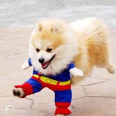 Super Puppy to save the day!