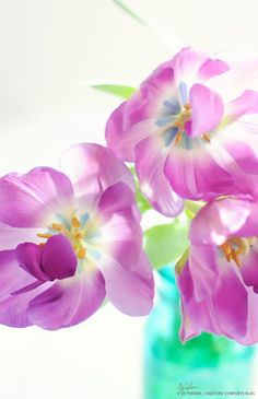 Violet Tulips - Home - Creature Comforts - daily inspiration, style, diy projects + freebies