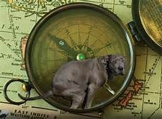 Lost Without a Compass? Use Your Dog's Butt to Navigate!