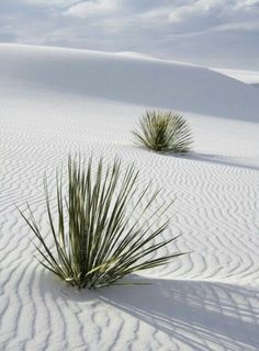 White Sands National Monument New Mexico National Park Service «Белый песок» ...