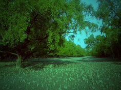 The Sundarbans mangrove forest, Mother Nature by Atanu Shome, via Flickr.  Read about it. this place is amazing.