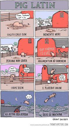 funny-Pig-Latin-farmer-flying