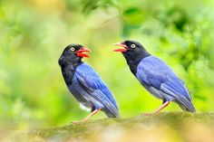 Brothers Chatting by littletree131 #animals #pets #fadighanemmd
