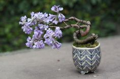 Unknown species, windswept, patterned violet and white round Japanese pot