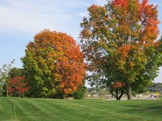 Photos: Fall colors are beginning to appear