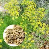 MEDICINAL PLANTS:  1.ADAS plant These plants have a variety of desig...