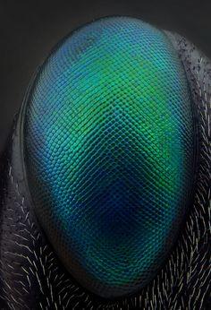 Stunning Extreme Macro Photography Shots by Gold Medalist AlHabshi Macro Photography Tips, Microscopic Photography, Insect Photography, Texture Photography, Close Up Photography, Water Photography, Levitation Photography, Exposure Photography, Insect Eyes
