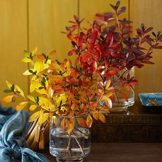 Arrange branches of fall leaves by hue to establish a color-blocking effect. Place one color of leaves so they land on one side of the vase and another color so that they fall to the other side of the vase.