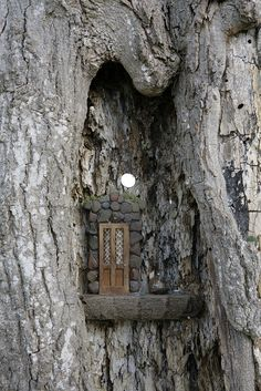 Fairy Door -High in a notch of the tree