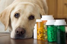 Pain meds for Dogs - David Young-Wolff Collection/Photographer's Choice/Getty Images