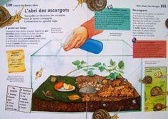 escargotière