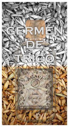 Aceite Germen de Trigo, el rey de la Vitamina E http://wp.me/p3EEwy-il en eartesano.com
