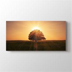 Ağaç ve Güneş