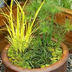 Best Ornamental Grasses for Containers - Bing Images