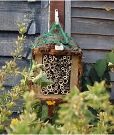 How to make a bee hotel - using dried plant stems! (activity plus gorgeously illustrated book)