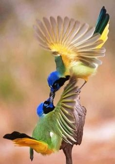 Nos oiseaux de l'hiver