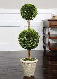 No green thumb? No problem. Natural evergreen foliage preserved while freshly picked, looks and feels like living boxwood. Double spheres arranged on wooden twigs, potted in a mossy stone finished terracotta planter.10