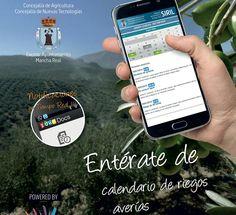 Mancha Real desarrolla la primera app del mundo sobre regadíos en el sector del olivar