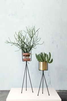 http://www.hollys-house.com/collections/new-in/products/black-metal-plant-stand
