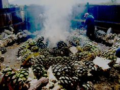 Mezcal is tequila's mature cousin, an ancient spirit pulled from the Agave plant.  . Mezcal is mainly distilled from the Espandin Agave in the Oaxaca region of Mexico.  Delicious Mezcal Tasting Experience: Delicious by Aldo Argaman