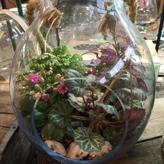 Terarriums are a fun & beautiful way to garden indoors. The health benefits of having plants indoors are undeniable. #terrarium #garden #PenfieldNY