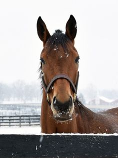Beholder enjoying her first snowfall in quite a while today