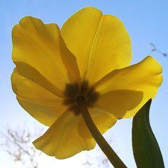 yellow : )