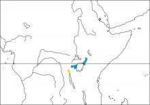 Jackson's Pipit (Anthus latistriatus)