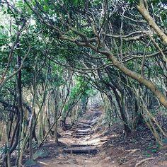 【haruna31】さんのInstagramをピンしています。 《トトロの森みたい☆ #トトロの森 #森#トンネル #木#植物#自然#探検#散策#綺麗#totoro #totoroforest #forest #tree #plants #nature#expedition #stroll #beautiful》