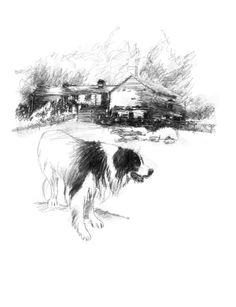 Border Collie Art, Sketch A Day, Collie Dog, Peak District, Uk Shop, Farming, Printmaking, Charcoal, Sketches