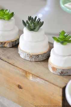 Mini succulent cakes at a Bee Baptized | Bee themed baptism birthday party by Kara Allen | Kara's Party Ideas | KarasPartyIdeas.com Baby shower ideas, too!-98