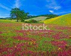 Spring Wildflowers In California Royalty Free Stock Photo