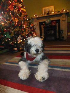 Zac on Christmas Eve