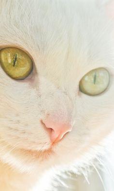 480x800 Wallpaper cat, face, light, glare, eye