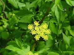 Wildflowers of Spring #1