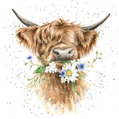 Artistic Blank Card - Daisy Coo - Highland Cow with Flowers - from Wrendale Designs - Suitable for Birthdays & Other Occasions Highland Cow Painting, Highland Cow Art, Highland Cattle, Animal Paintings, Animal Drawings, Highland Cow Tattoo, Cow Drawing, Fluffy Cows, Cow Pictures