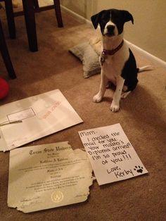 Dog Shaming. See more here: http://blog.dtoday.de/neonroehren/2012/10/dog-shaming-hunde-gestehen-ihre-schandtaten/