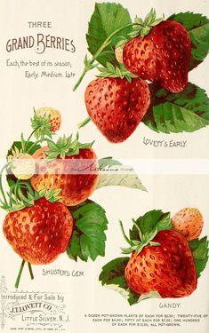 Printable Digital Download  Strawberries Antique Ephemera